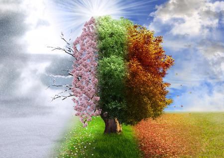 estaciones del a�o: Cuatro �rbol temporada, manipulaci�n de la foto, m�gico, naturaleza