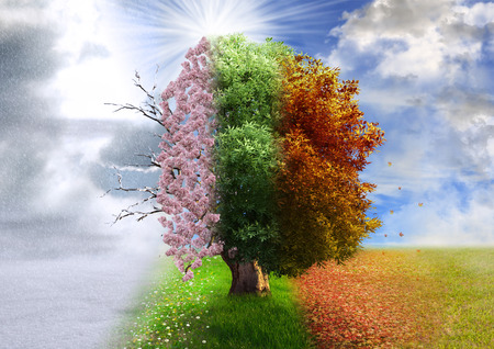 Four season tree, photo manipulation, magical, nature Stok Fotoğraf