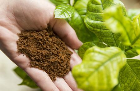 planta de cafe: Caf� en mano con la planta de caf�