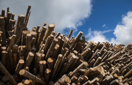 workable: Tree logs Stock Photo