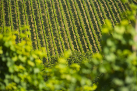 wine road: Wine road, Maribor, Slovenia Stock Photo