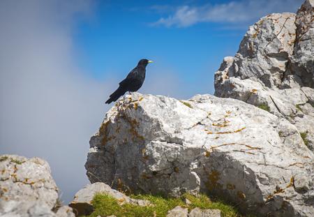 Crow on the peak of Stol mountain, Slovenia
