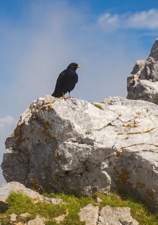 karavanke: Crow on the peak of Stol mountain, Slovenia