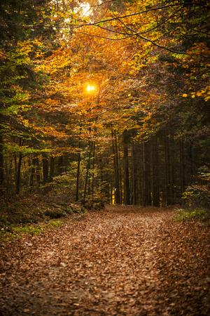 Autumn scene in Tuhinj valley, Slovenia