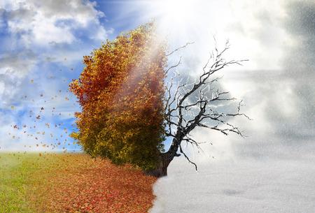 Autumn and winter season tree, concept Standard-Bild