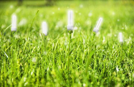 Renevable energy, lightbulb concept on meadow Standard-Bild