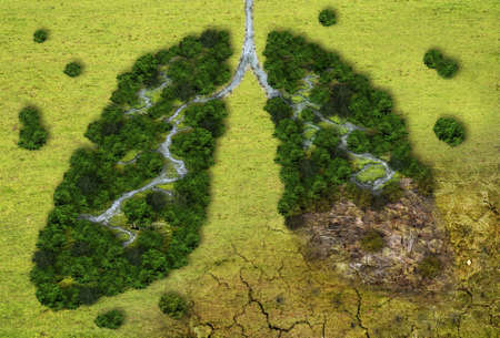 Forest in a shape of lungs - deforestation and global warming concept