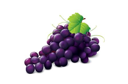 ripe grape Stock Vector - 5637695