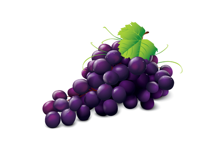 edible leaves: ripe grape Illustration