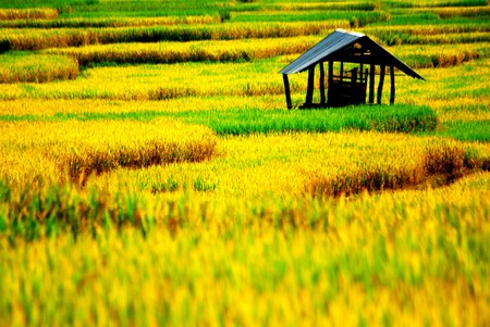 Chiangmai Thailand Stock Photo