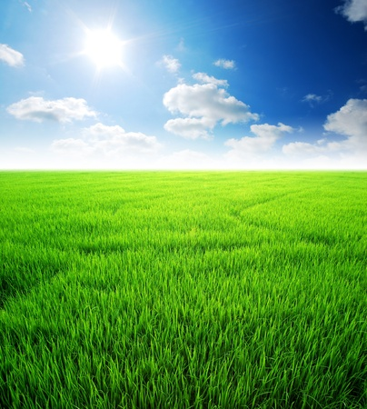 green field: Rice field green grass blue sky cloud cloudy landscape background