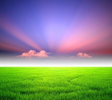 Rice sunset farm landscape sky beautiful field Stock Photo