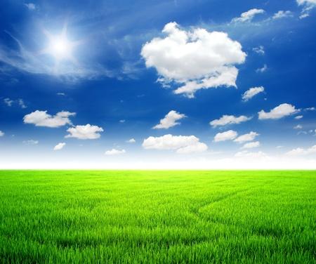 Rice field green grass blue sky cloud cloudy landscape background