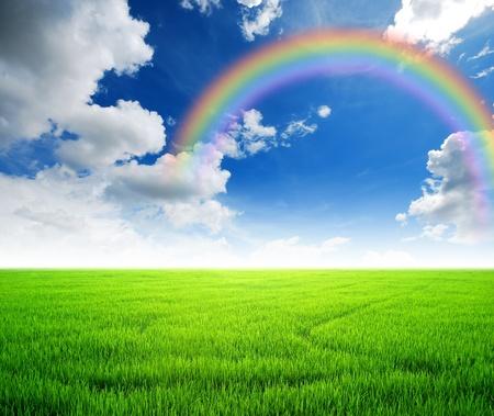 Reisfeld grüne Gras blauen Himmel bewölkt Landschaft Hintergrund gelb Regenbogen