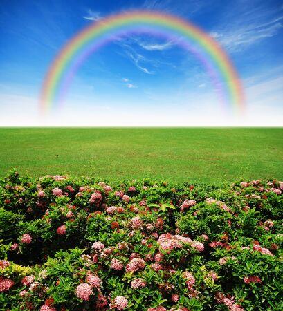 Garden pink flower lawn blue sky daylight green grass rainbow photo