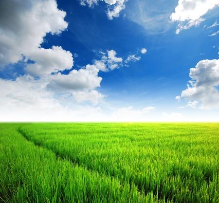 Rijstveld groene gras blauwe lucht wolk bewolkt landschap achtergrond