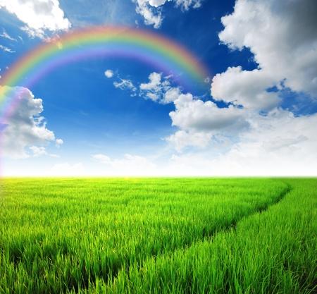 Rice field green grass blue sky cloud cloudy landscape background rainbow Stock Photo