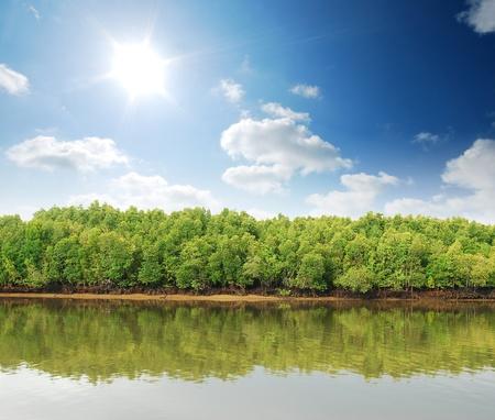 Mangrove bos actuele regenwoud voor achtergrond ontwerp Thailand