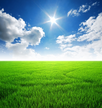 Rice field green grass blue sky cloud cloudy landscape background lawn Stock Photo