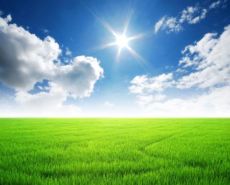 Rijstveld groen gras blauwe lucht wolk bewolkte landschap achtergrond