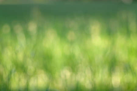 Grass bokeh blur background light for design
