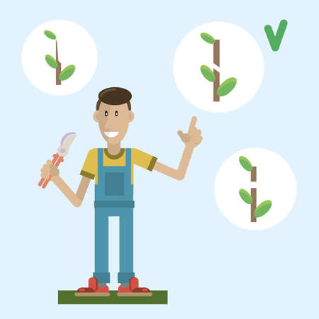 The gardener explains the rules of pruning fruit trees. Vector illustration in a flat style 向量圖像