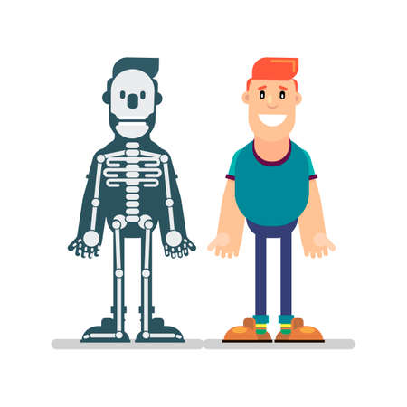 Cartoon male skeleton anatomy chart. Simple flat vector illustration of man and skeletal system cross section. Illustration