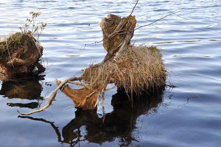 snag: Snag in water
