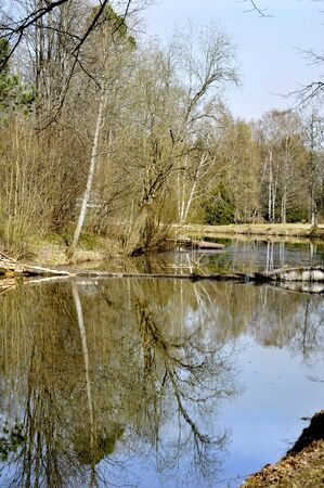 Trees reflections in river Stock Photo - 13957606