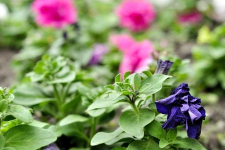 sapless: Sapless flower Stock Photo