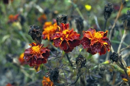 sapless: Sapless flowers Stock Photo