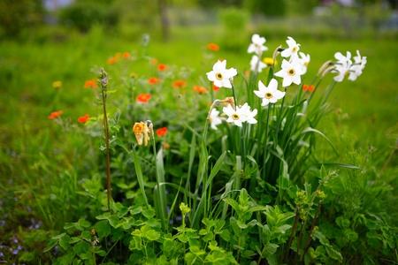 sapless: Sapless flowers in the garden