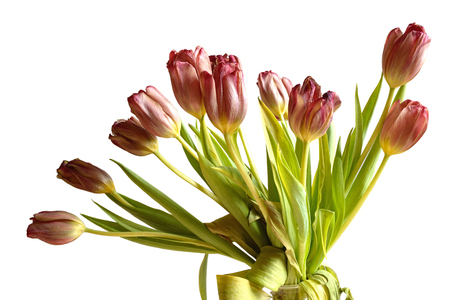 faded: Faded bunch tulips flowers isolated Stock Photo