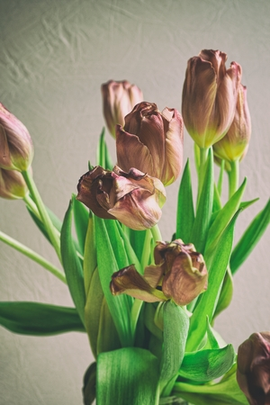 faded: Vintage style faded bunch tulips flowers