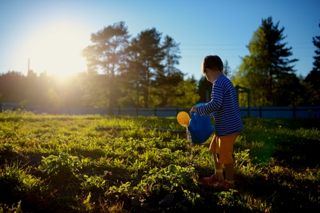 Little boy watering plants in garden at summer day photo