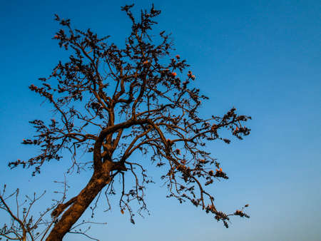 enviroment: tree on blue sky
