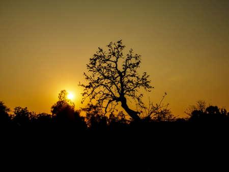 tropical tree: Patr�n de la puesta del sol �rbol tropical Foto de archivo