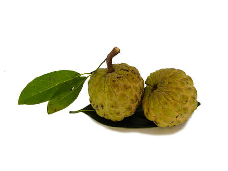 anona: The eating custard apple a good healthy. Stock Photo