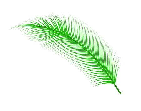 vector illustration of a coconut leaves isolated on white