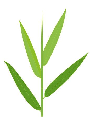 Vector illustration of bamboo leaves isolated on white Çizim