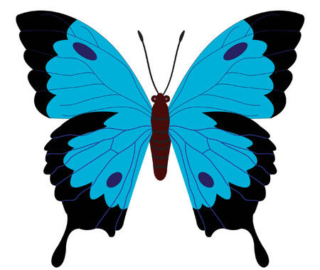 butterfly: vector illustration of a black blue butterfly