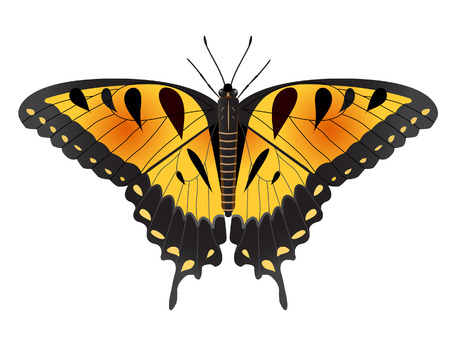 vector illustration of an easter tiger swallow butterfly