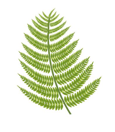 vector illustration file of a fern branch Illustration
