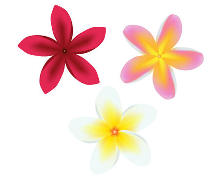 plumeria flower: vector illustration of a frangipani plumeria flower set