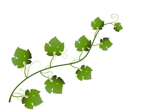 vector raster background: vector  illustration of green grape leaves on vine Illustration