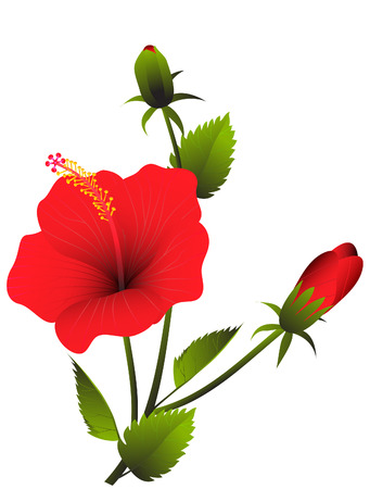 red hibiscus flower: vector  illustration of a branch of red tropical hibiscus