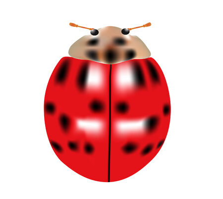 vector  illustration of a single ladybug isolated on white Ilustrace
