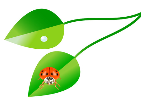 vector  illustration of lady bug and pothos isolated on white background Stock Vector - 4244114