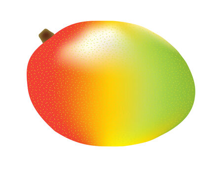 vector  illustration of a single three color mango Vector