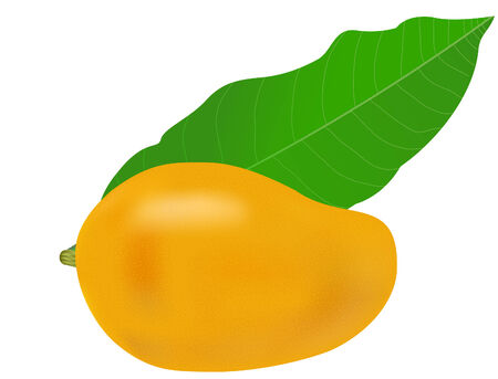 vector  illustration of a mango fruit and leaf 일러스트